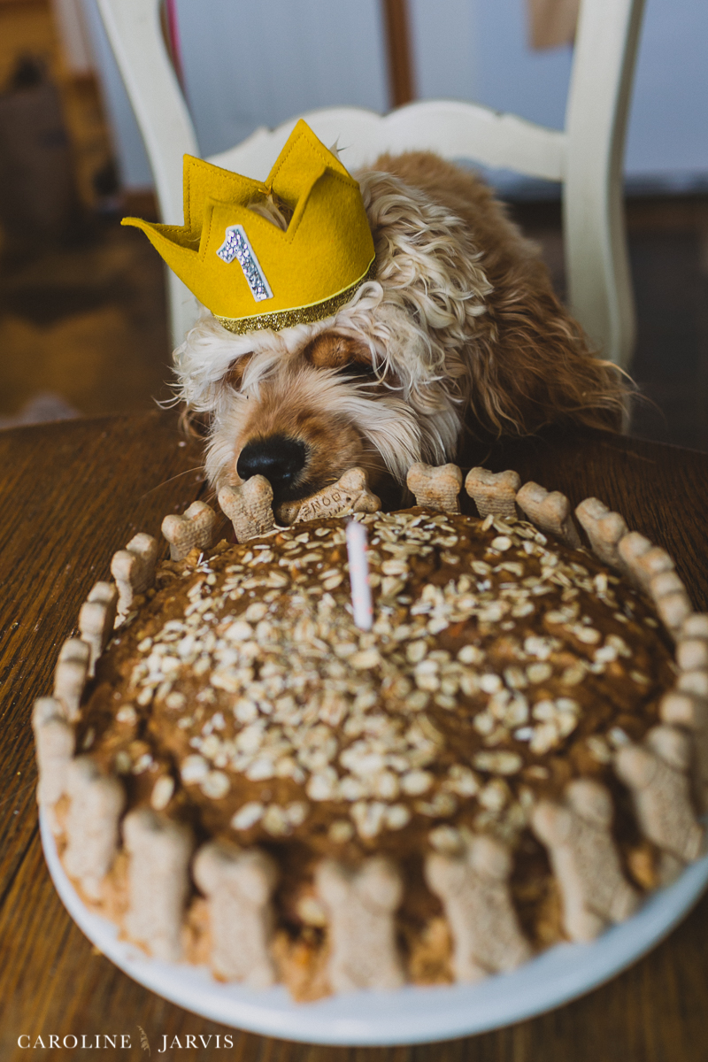 Buxtons_first_birthday-October 12, 2015168