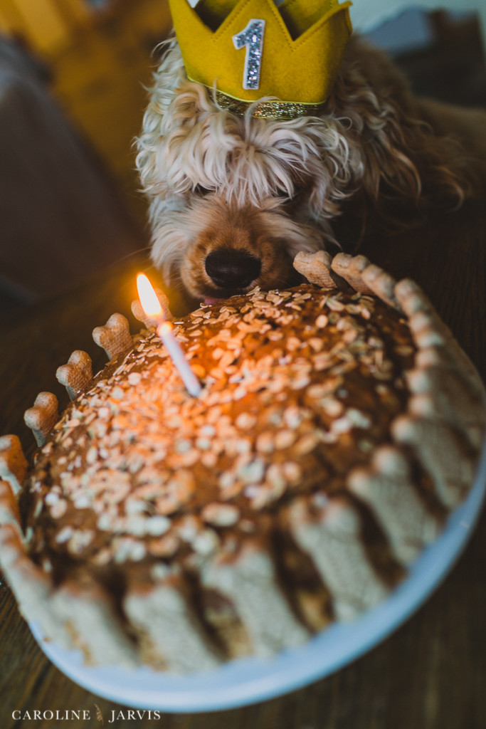 Buxton's First Birthday - Homemade Milkbone Carrot Cake by Caroline Jarvis Photography