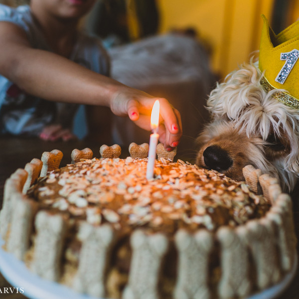 Buxton's First Birthday - Homemade Milkbone Carrot Cake