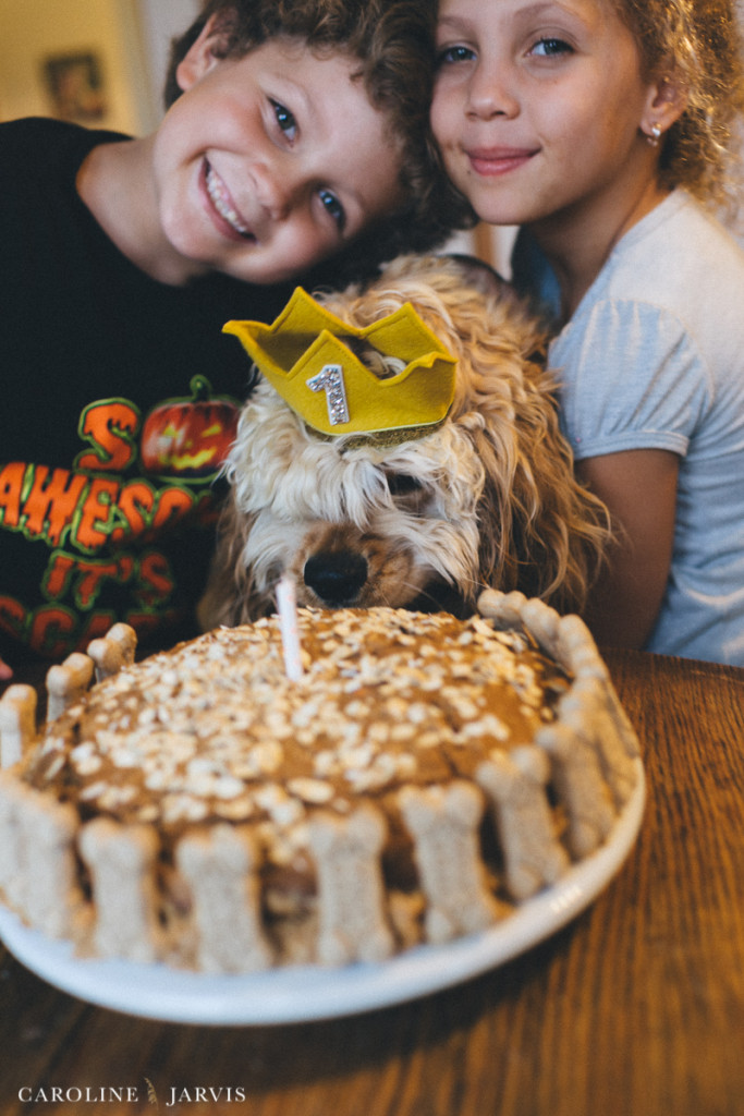 Buxton's First Birthday - Homemade Milkbone Carrot Cake