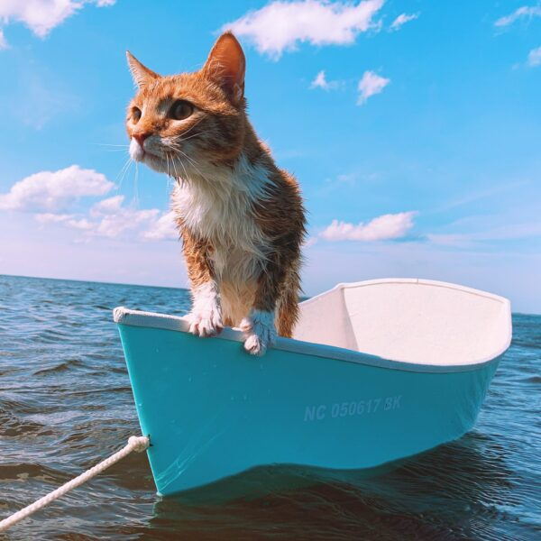 Marlin got his Captain's License and bought his first BOAT :) He's ready for some Outer Banks Fishing!